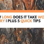 How Long Does It Take Wood To Dry | Plus 5 Quick Tips