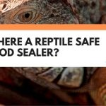 Is There A Reptile Safe Wood Sealer? Here's What You Should Know