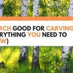 Is Birch Good For Carving? (Everything You Need To Know)