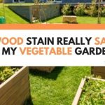 Is Wood Stain Really Safe For My Vegetable Garden? (What You Need To Know)