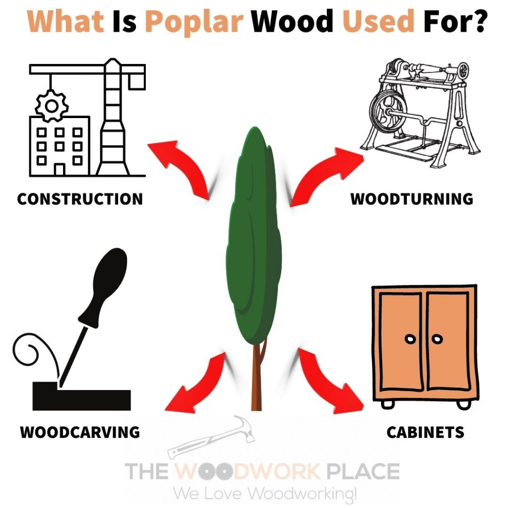 What Is Poplar Wood Used For?
